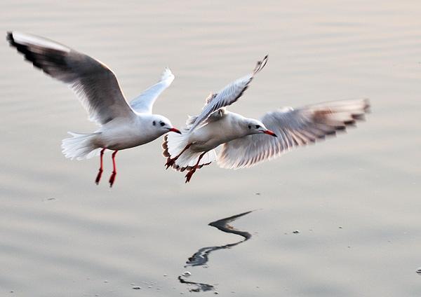 自由自在的飞禽动物